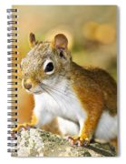 Cute Red Squirrel Closeup Spiral Notebook