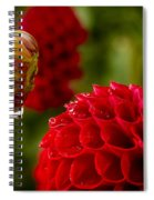 Dahlia Bud With Dew Spiral Notebook