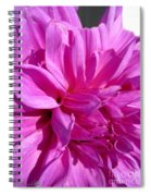 Dahlia Named Lilac Time Spiral Notebook