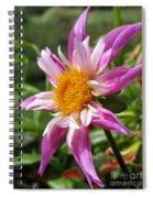 Dahlia Named Lorona Dawn Spiral Notebook