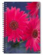 Daisy Love Spiral Notebook