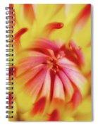 Dayglo Dahlia Spiral Notebook