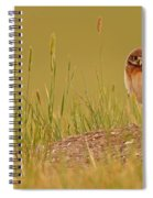 Digitally Enhanced Image With Painterly Spiral Notebook