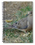 Doves Spiral Notebook