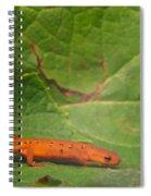 Easterm Newt Nnotophthalmus Viridescens 15 Spiral Notebook