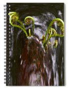Ferns In A Stream Spiral Notebook