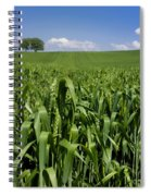 Field Of Wheat. Auvergne. France. Europe Spiral Notebook