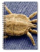 Flat Mite Spiral Notebook