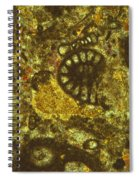 Foraminiferous Limestone Lm Spiral Notebook