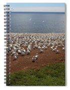 Gannet Colony Spiral Notebook