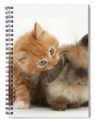 Ginger Kitten And Young Lionhead-lop Spiral Notebook