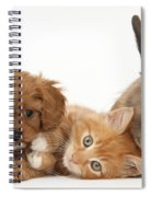 Ginger Kitten With Cavapoo Pup Spiral Notebook