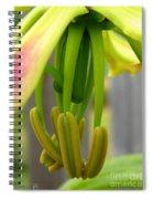 Gloriosa Named Rothschildiana Spiral Notebook