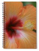 Gods Garden Spiral Notebook