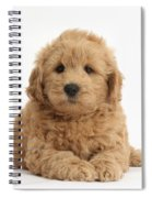 Goldendoodle Puppy Spiral Notebook