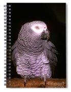 Gray Parrot Spiral Notebook