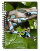 Green And Black Poison Frog Spiral Notebook