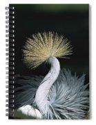 Grey Crowned Crane Balearica Regulorum Spiral Notebook