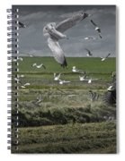 Gull Chased Tractor Spiral Notebook