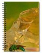 Halicid Bee 6 Spiral Notebook