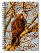 Hawk In A Tree Spiral Notebook