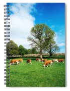 Hereford Bullocks Spiral Notebook