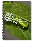 Hornworm With Braconid Wasp Parasites 2 Spiral Notebook