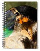 Horse Fly Spiral Notebook
