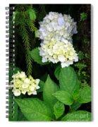 Hydrangea Blooming Spiral Notebook
