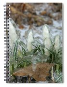 Ice-coated Crocuses Spiral Notebook