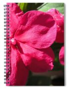 Impatiens Named Dazzler Burgundy Spiral Notebook