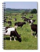 Ireland Friesian Cattle Spiral Notebook