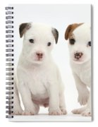 Jack Russell Puppies Spiral Notebook