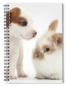 Jack Russell Terrier Puppy And Baby Spiral Notebook