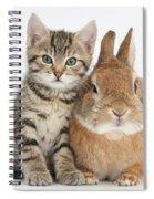 Kitten And Netherland Dwarf-cross Rabbit Spiral Notebook