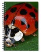 Ladybird Beetle Spiral Notebook