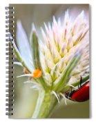 Ladybug On Thistle Spiral Notebook