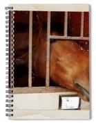 Leonardo Spiral Notebook