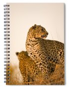 Leopard Panthera Pardus, Arathusa Spiral Notebook