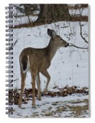Little White Tail On The Move Spiral Notebook