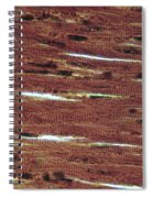 Lm Of Cardiac Muscle Spiral Notebook