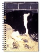 Mad Cow Disease Spiral Notebook