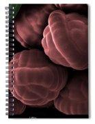 Male Fern Sporangia, Sem Spiral Notebook