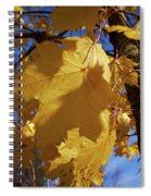Maple In Fall Spiral Notebook