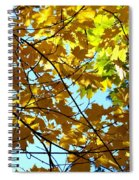 Maple Leaf Canopy Spiral Notebook