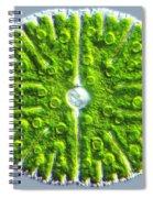 Micrasterias Denticulata Spiral Notebook