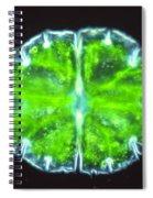 Micrasterias Spiral Notebook
