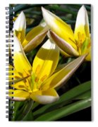 Mini Botanical Tulip Named Dasystemon Tarda Spiral Notebook