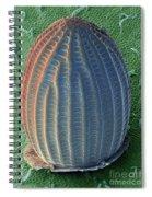 Monarch Butterfly Egg, Sem Spiral Notebook