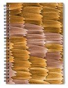 Monarch Butterfly Scales, Sem Spiral Notebook